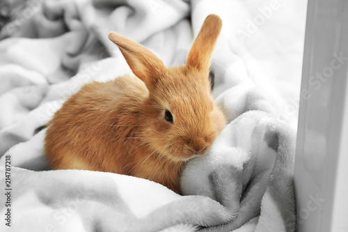 Cute fluffy bunny on windowsill at home Tableau sur Toile