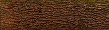 Embossed Texture Of The Bark O...