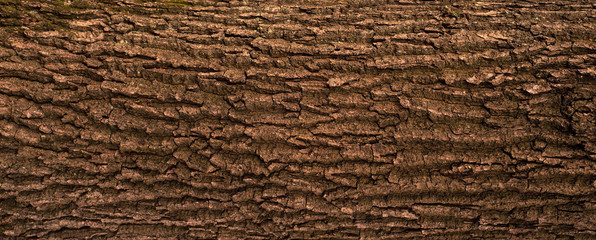Embossed texture of the bark of oak. Panoramic photo of the oak texture.