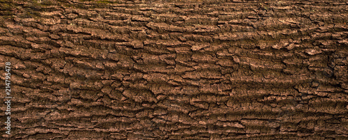 Fotografia  Embossed texture of the bark of oak
