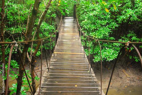 Fototapety, obrazy: Mangrove forest, wood bridge in mangrove forest, tree in mangrove forest