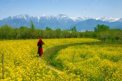 Foto auf Leinwand Honig Mustard field in Pahalgam Kashmir India . A Muslim Kashmiri girl or Indian girl walking in the mustard fi