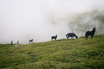 Środkowo-bałkański park narodowy w Bułgarii zwierzęta