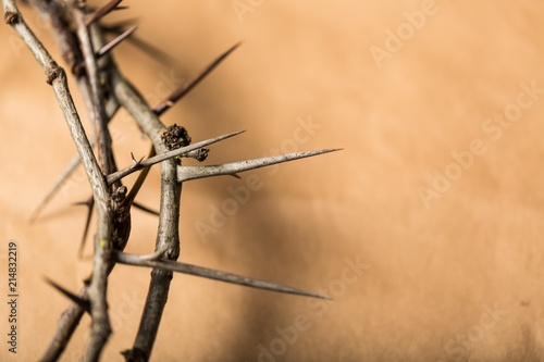 Canvas Print Closeup of a Crown of Thorns
