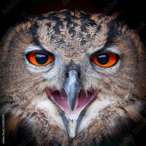 Obraz na plátně  Eagle Owl Portrait