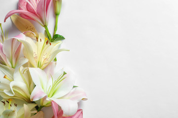 Composition with beautiful blooming lily flowers on white background