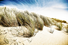 Windswept Sand Dunes At Kellog...