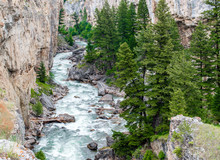 Scenic Boulder River Running Through A Steep Rocky Canyon  Full Of Lush Pine Trees Near Bozeman, Montana