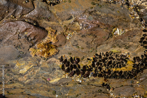 Photo  Abstract of tidepools in the pacific ocean.