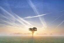 Condensation Trails In The Sky, Sunrise In Basse, Lake Mariensee, Neustadt Am Ruebenberge, Lower Saxony, Germany, Europe