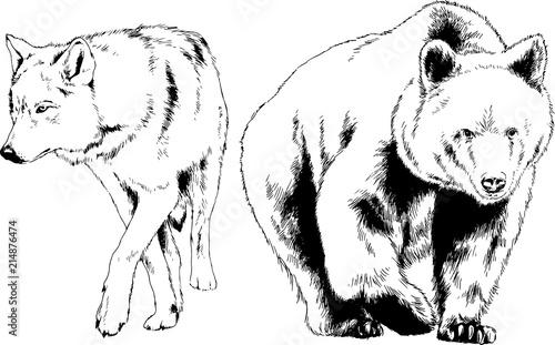 Naklejka premium zestaw rysunków wektorowych na temat drapieżników jest rysowany ręcznie tuszem