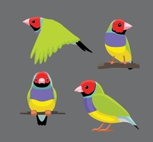 Bird Poses Gouldian Finch Vect...