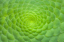 Symmetric Green Background Of ...