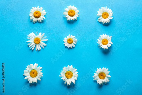 In de dag Madeliefjes Beautiful camomile flowers on color background