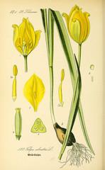 Plakat Illustration of plant
