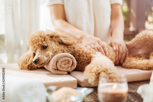Keuken foto achterwand Spa Woman giving body massage to a dog. Spa still life with aromatic candles, flowers and towel.