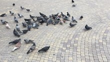 We Feed Pigeons In The Square ...