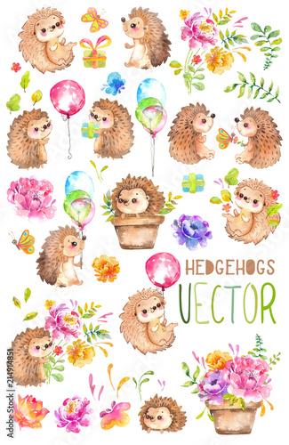 Watercolor Hedgehogs. Babies. Watercolor little animal clipart