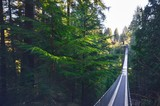 Breathtaking View of Capilano Suspension Bridge Amidst Lush Green Pine Forest in Vancouver