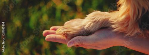 Yorkshire terrier gives paw © yolya_ilyasova