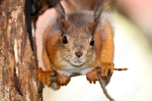 Cadres-photo bureau Squirrel Squirrel