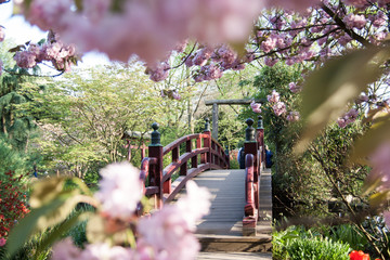 Fototapeta Mosty Frühling im Japanischen Garten Leverkusen