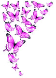 Fototapeta Buterfly - pink butterflies design, isolated on a white background