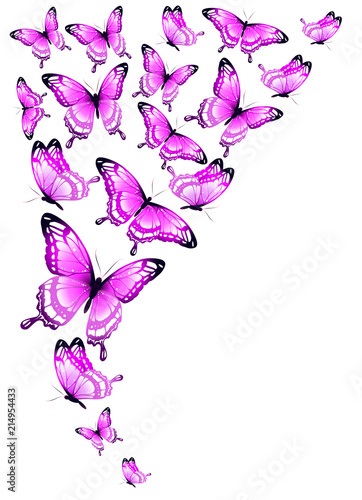 pink butterflies design, isolated on a white background
