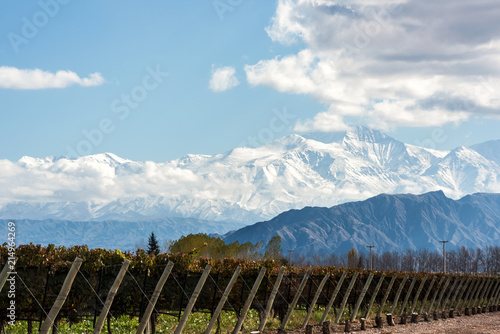 Obraz Early morning in the late autumn: Volcano Aconcagua Cordillera and Vineyard. Andes mountain range, in the Argentine province of Mendoza - fototapety do salonu
