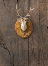 Head Of A Deer On A Wooden Wall