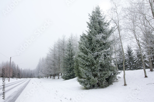 Poster Wit Winter landscape with snow-covered road and frosty trees.