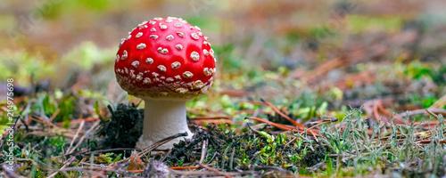 Amanita Muscaria poisonous mushroom Wallpaper Mural