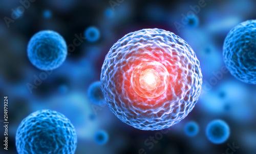 Stammzellen - 3D Visualisierung