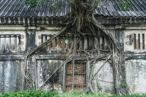 Aluminium Prints Old abandoned buildings tree root grow on old house
