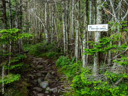 Cuadros en Lienzo Hiking Trail with Trail Sign, Appalachian Trail, Dense Forest