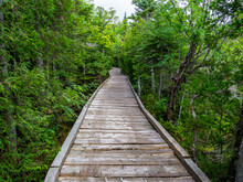 Boardwalk Through Lush Forest, Chimney Pond Trail, Baxter State Park