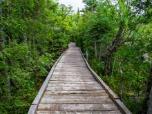 Boardwalk Through Lush Forest,...