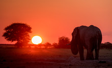 Silhouette Of An Elephant At S...