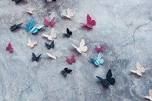 Butterflies On The Concrete Wall