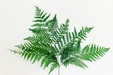 Beautiful Healthy Fern Leaf On...