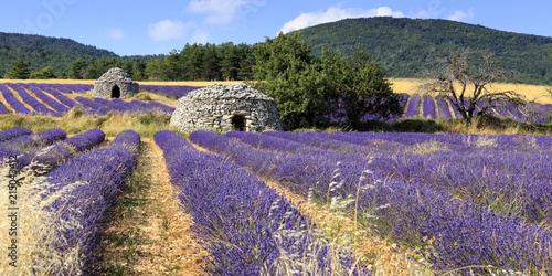 Old borie and lavender field in Provence, south of France