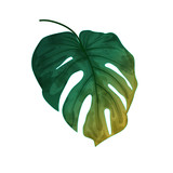 Hand drawn watercolor leaf isolated on white background, digital painting - 215059087
