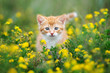 beautiful red kitten posing in grass outdoors