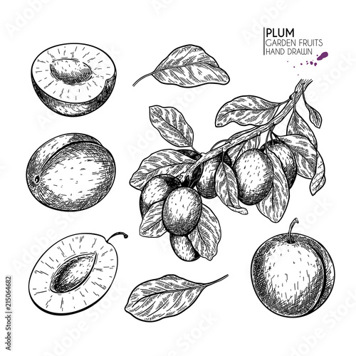 Hand drawn whole plum, slice and branch Wallpaper Mural