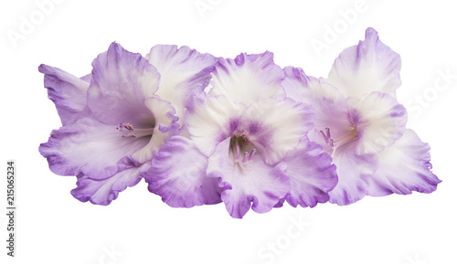 Fotobehang Lilac Gladiolus flowers isolated