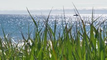 Close Up Of Long Green Grass On The Beach, Next To Stunning Seascape With Fishing Boats In The Distant Horizon, Sailing On The Blue Ocean On A Warm, Relaxing Summer Day.