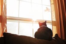 Black And White Cat Watching A...