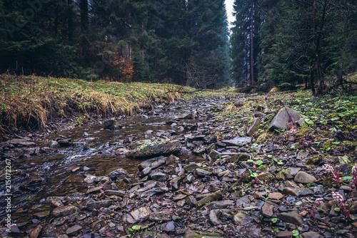 River Bila Ostravice in Moravian-Silesian Beskids mountain range in the Czech Re Poster