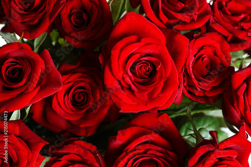Beautiful red rose flowers as background, closeup #215074473