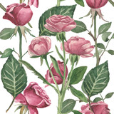 Watercolor pattern of flowers and buds of roses and stems with leaves on a crystal white background - 215103219